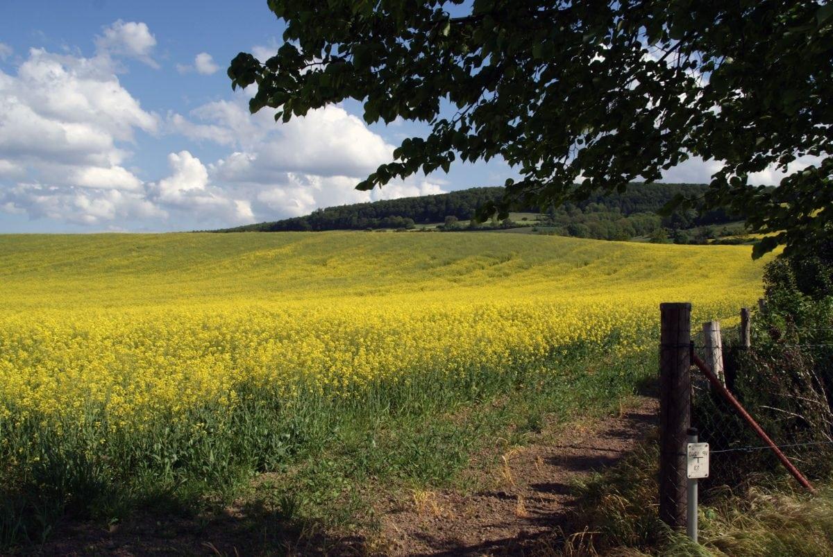 Que faire d'un terrain agricole ?